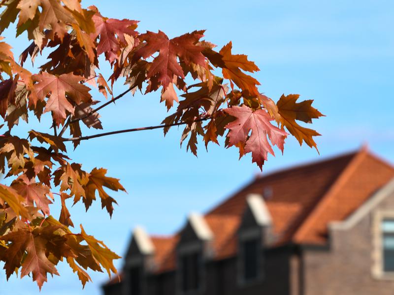 Fall at AU